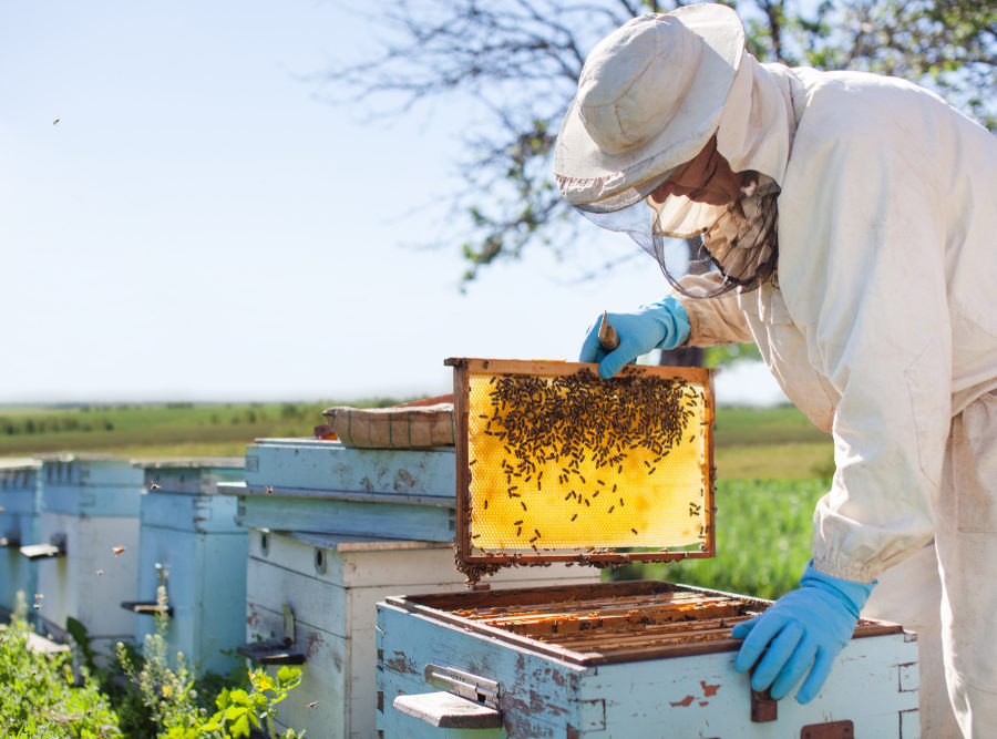 Purus Meda: včelí produkty provoněly největší média